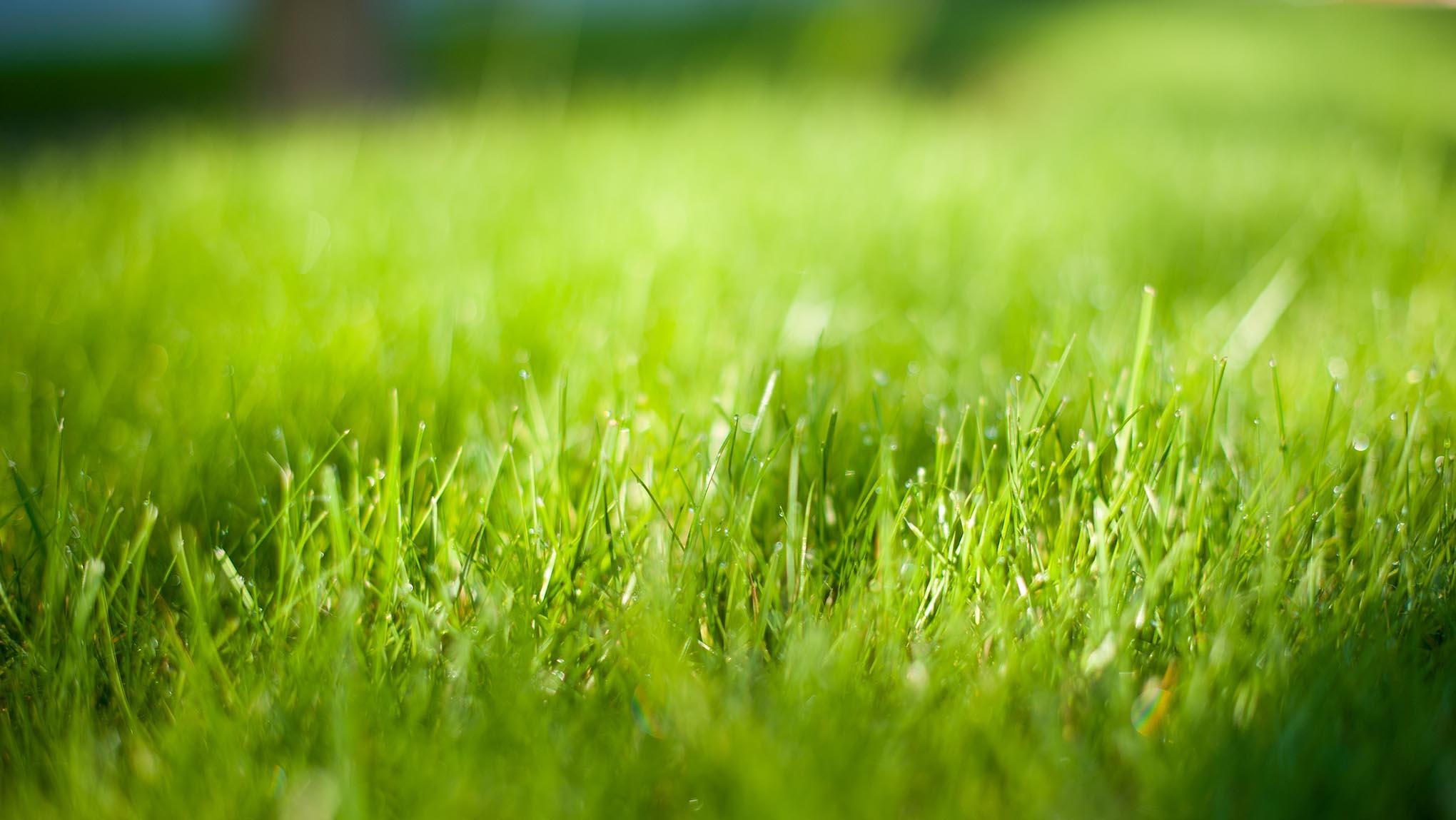 Foto van gras met een beperkte scherptediepte.